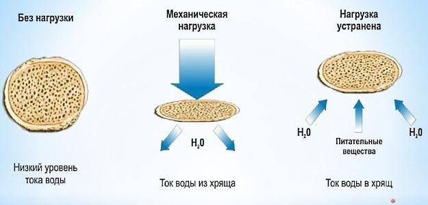 Хондропротекторы помогают восстановить функции хрящевой и костной ткани