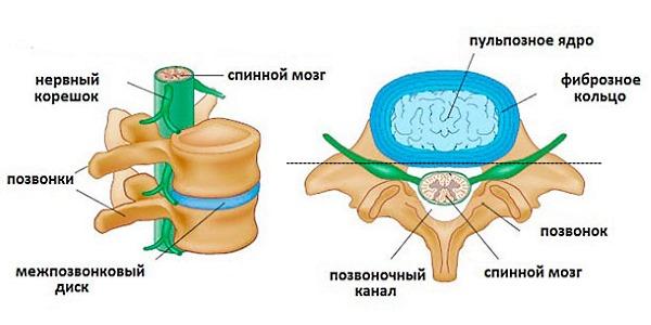Все инфекционные заболевания классифицируются в зависимости от пораженного отдела позвоночника
