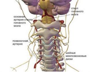 Гимнастика для шеи позволяет улучшить кровообращение и метаболизм в этом отделе