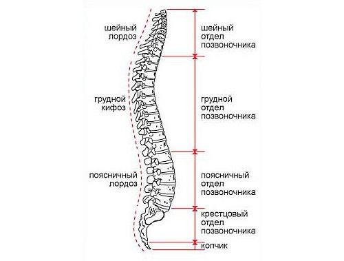 Чаще всего повреждаются позвонки нижней части спины и шеи