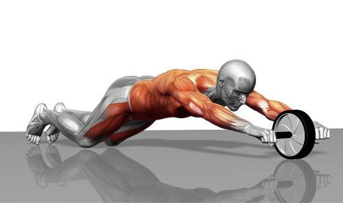 Колесо задействует максимальное количество мышц торса