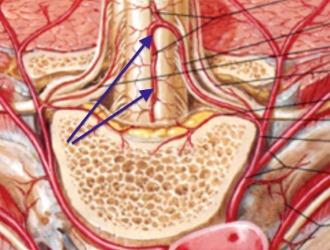 Физиотерапия улучшает кровообращение и метаболизм тканей спины