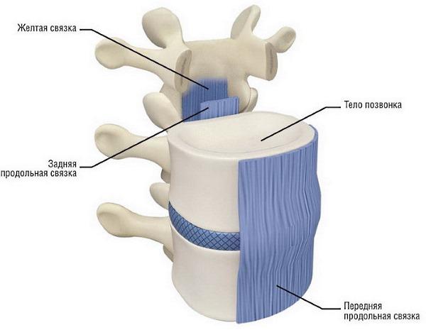 Иглорефлексотерапия способствует снятию мышечного напряжения позвоночника, что уменьшает компрессию на диски