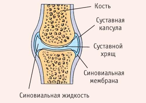 Хондропротекторы помогают восстановить хрящевую ткань суставов