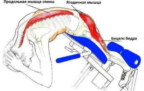 Римский стул - основной снаряд для укрепления мышц спины