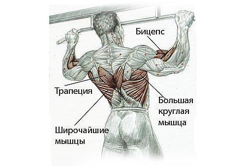 Турник является основным тренажером для упражнений на спину