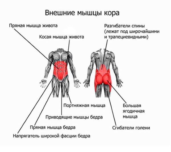 Мышцы пресса играют важную роль в поддержании позвоночного столба, особенно при грыже поясничного отдела