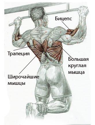 Обратите внимание какие группы мышц задействуются при занятиях на турнике