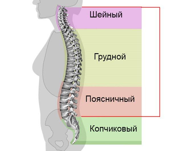 Горб, как правило, развивается в шейно-грудном отделе позвоночника