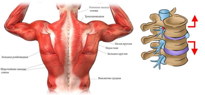 Принцип гимнастики Аляутдинова основывается на укреплении мышечного корсета и вытяжении позвоночника