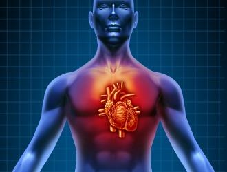 При некоторых сердечных патологиях прием Аркоксия противопоказан