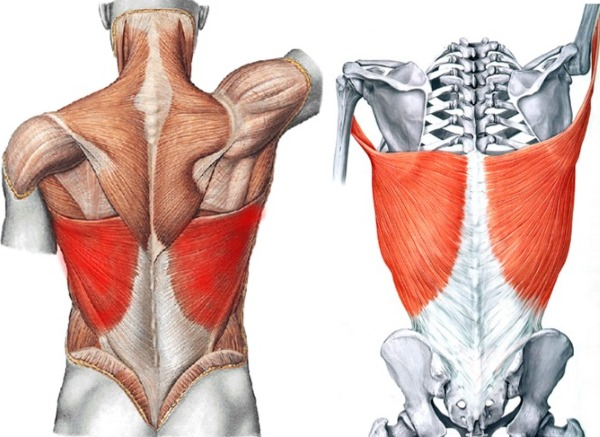 Широчайшая - одна из самых больших групп мышц всего тела человека