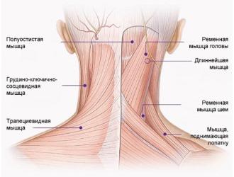 Массаж при невралгии затылка выполняется после устранения болевого синдрома