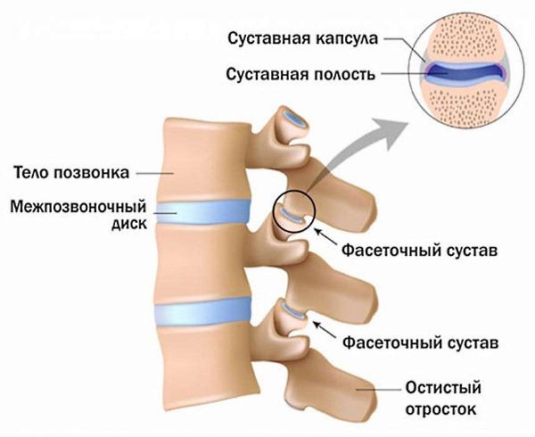 Медикаментозное лечение остеохондроза грудного отдела позвоночника. Таблетки и другие препараты при остеохондрозе грудного отдела