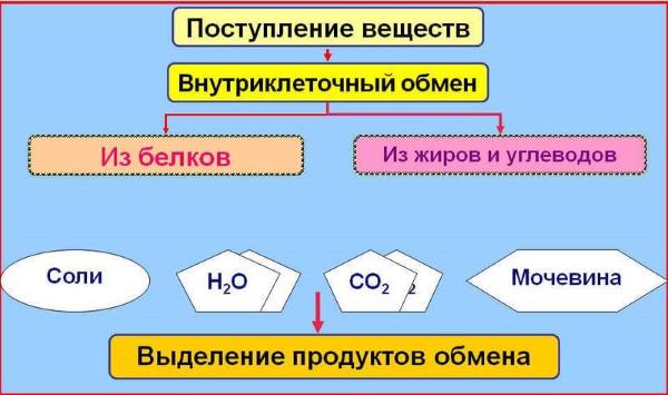Изображение - Чернослив для суставов отзывы content_21__econet_ru