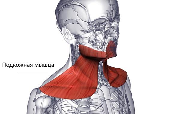 Изображение - Суставы и мышцы шеи rot6