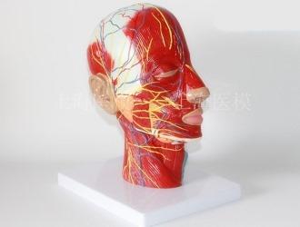 Остеохондроз позвоночника и грыжи: причины, симптомы, диагностика, лечение. Клинические рекомендации