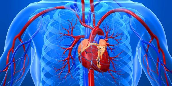 Массаж улучшает кровоток в сосудистой системе