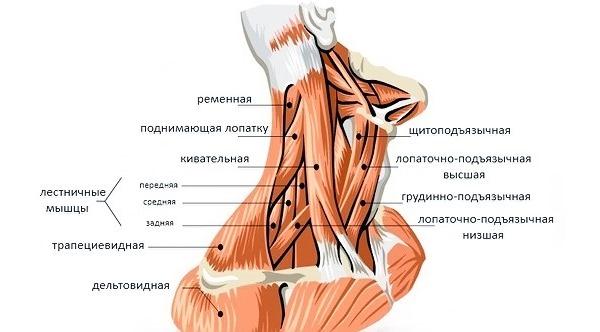 В начале терапии производится расслабляющий массаж для разогрева мышц шеи