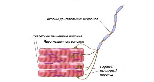 Обезболивающие препараты (таблетки, мази) при болях в спине и пояснице