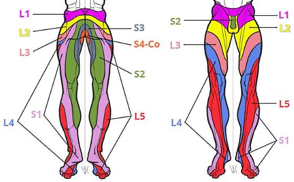 С увеличением выпячивания появляются боли в ногах, локализация которой зависит от места развития протрузии