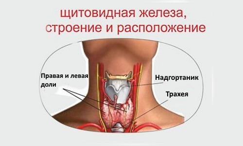 Нельзя прикладывать грелку спереди шеи, так как это негативно влияет на щитовидную железу