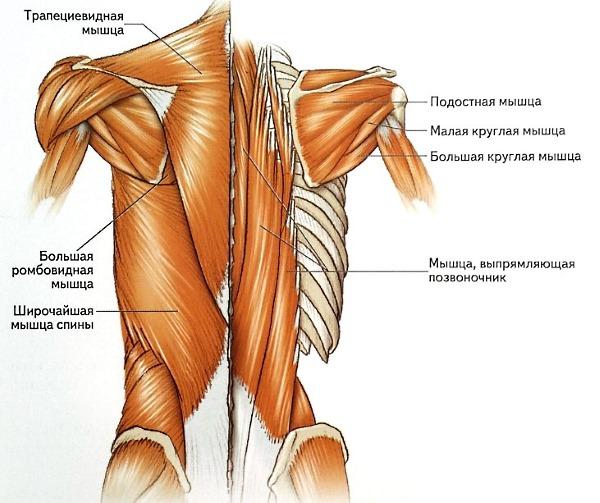 Важно укреплять не только наружные мышцы спины, но и глубокие