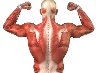 Массаж способствует укреплению позвоночника и мышц, а также устранению спазмов
