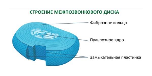 Обратите внимание на строение межпозвонкового диска