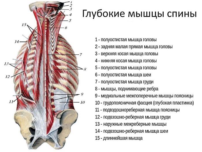 Система упражнений по-Бубновскому предусматривает проработку глубоких мышц спины