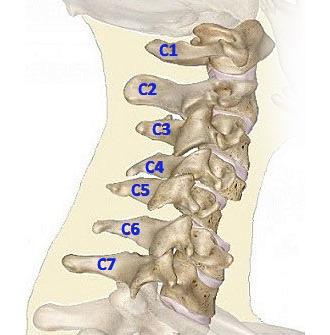 Локализация боли зависит от того, в каком месте произошло защемление нерва
