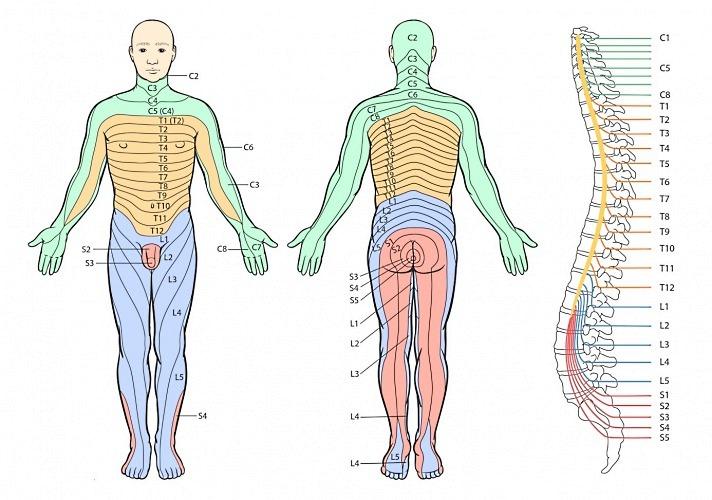 Межпозвоночная грыжа лечение виды стадии формирования симптомы заболевания диагностика межпозвоночной грыжи