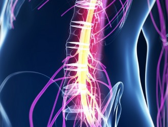 Самое опасное последствие расщепления позвоночника - повреждение спинного мозга