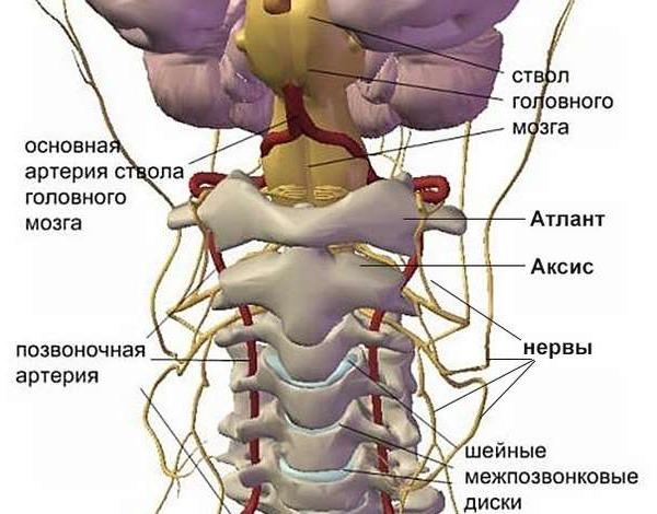 Что делать при развитии шейного остеохондроза