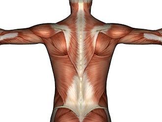 Ослабление мышечного корсета также способствуют прострелам в спине