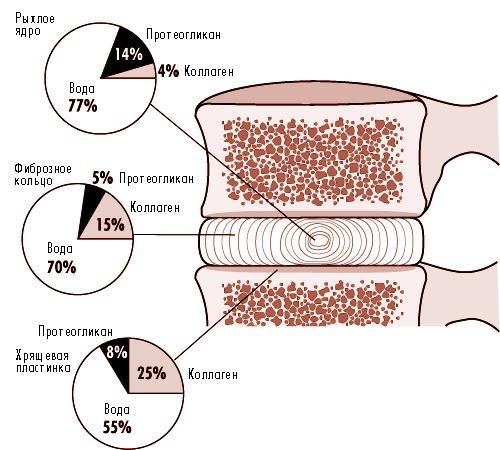 Подтягивания способствуют увеличению расстоянию между позвонками, снимая давление на диски позвоночника