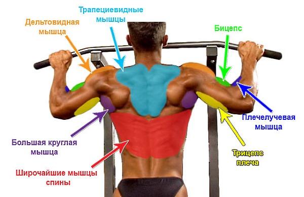 Обратите внимание на то, какие зоны спины участвуют при подтягиваниях